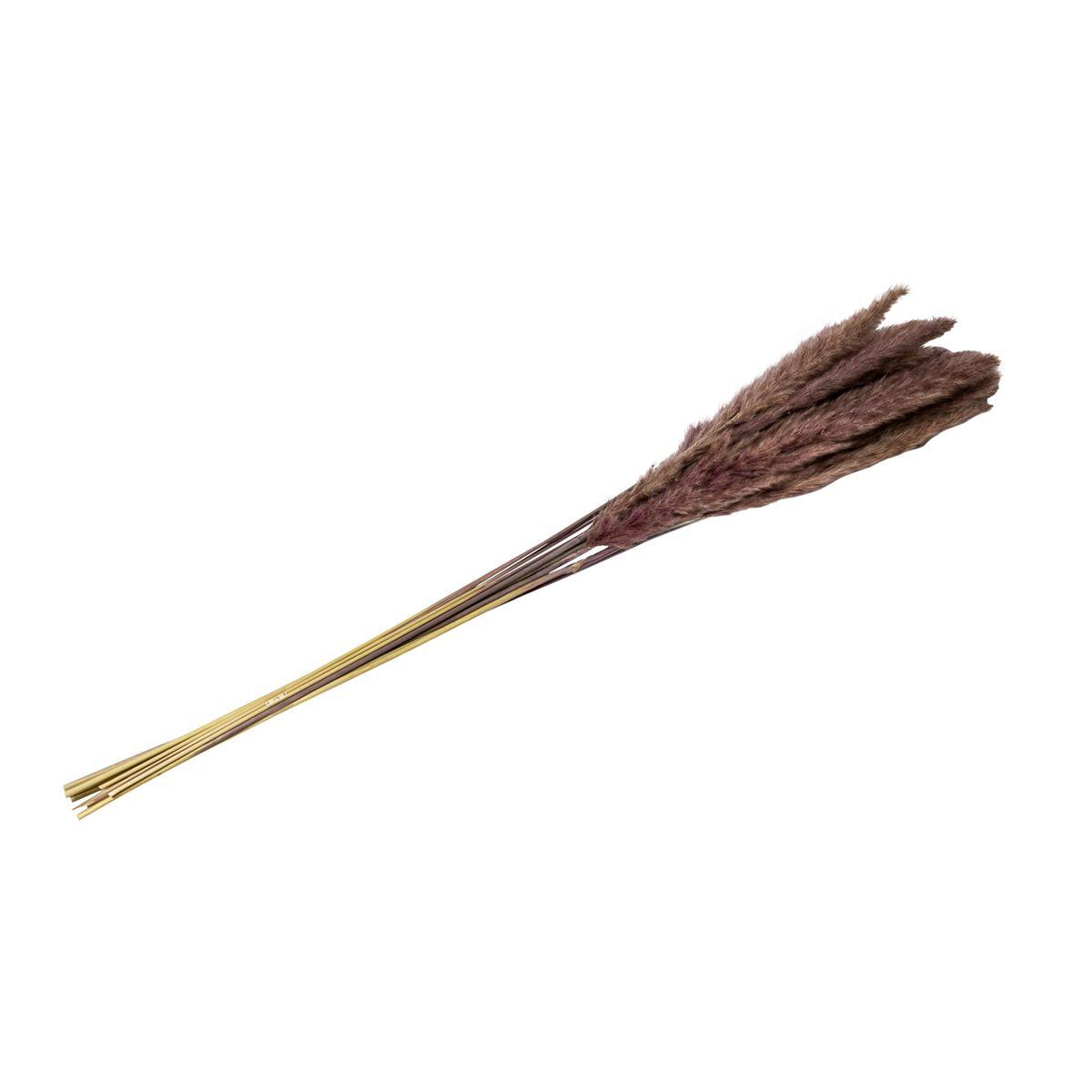 Epis de plumeaux séchés taupe H. 80 cm