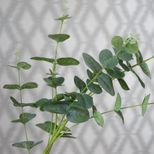Tige d'eucalyptus artificielle H. 91 cm