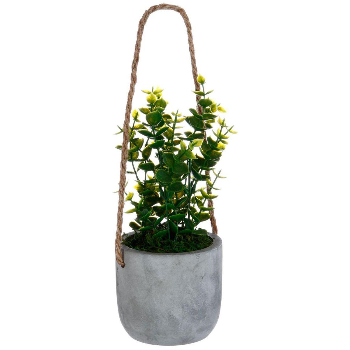 Plante pot a suspendre
