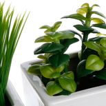 Plante pot aromatique x3